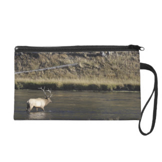 Bull Elk Crossing Madison River, Yellowstone 2 Wristlet