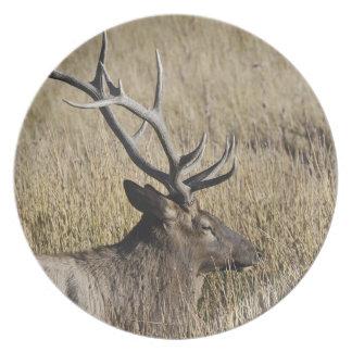 Bull Elk Crossing Madison River, Yellowstone 3 Dinner Plate
