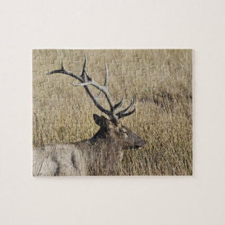 Bull Elk Crossing Madison River, Yellowstone 3 Jigsaw Puzzle