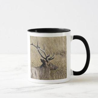Bull Elk Crossing Madison River, Yellowstone 3 Mug