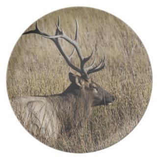 Bull Elk Crossing Madison River, Yellowstone Melamine Plate