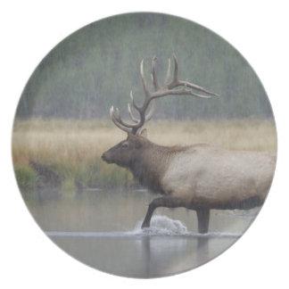 Bull Elk crossing river in snowstorm, Dinner Plate