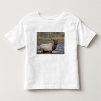bull elk crossing river, Yellowstone NP, Wyoming T Shirt