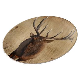 bull elk dinner plate