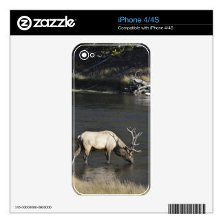 Bull Elk Drinking from Madison River Decal For The iPhone 4