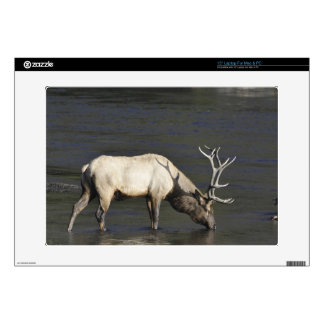 Bull Elk Drinking from Madison River Laptop Decal