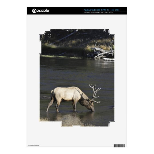 Bull Elk Drinking from Madison River Skins For iPad 3