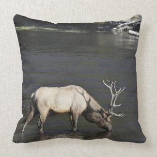 Bull Elk Drinking from Madison River Throw Pillow
