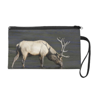 Bull Elk Drinking from Madison River Wristlet Purse