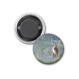 Bull Elk Fridge Magnet