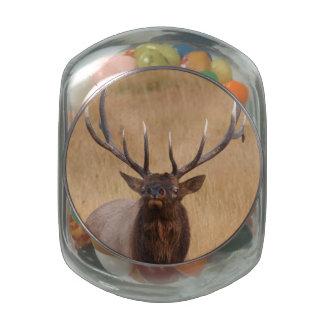 bull elk glass candy jar