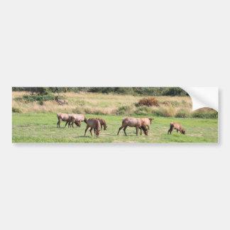 Bull Elk & Harem Car Bumper Sticker