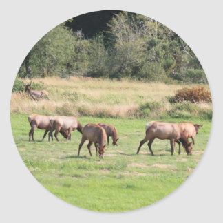 Bull Elk & Harem Classic Round Sticker