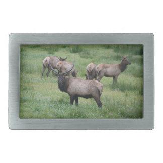 Bull Elk & Herd Rectangular Belt Buckle