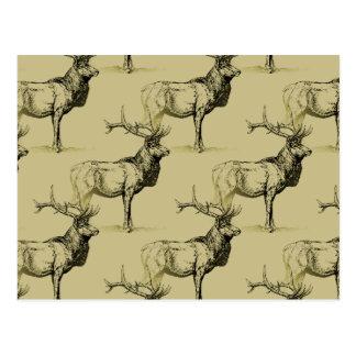 Bull Elk Hunters Wildlife Big Game Hunting Antlers Post Cards