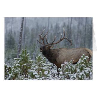 Bull Elk in snow calling, bugling, Yellowstone Card
