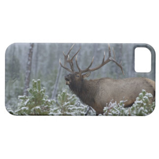 Bull Elk in snow calling, bugling, Yellowstone iPhone SE/5/5s Case