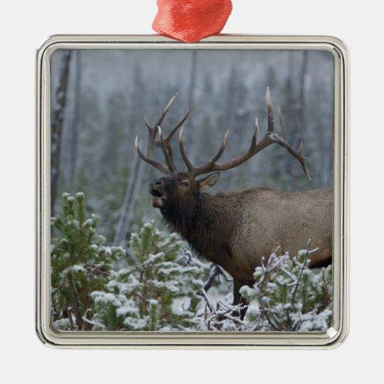 Bull Elk in snow calling, bugling, Yellowstone Metal Ornament