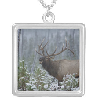 Bull Elk in snow calling, bugling, Yellowstone Square Pendant Necklace