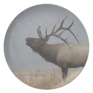 Bull Elk in snow storm calling, bugling, Dinner Plate