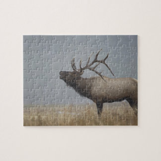 Bull Elk in snow storm calling, bugling, Jigsaw Puzzle