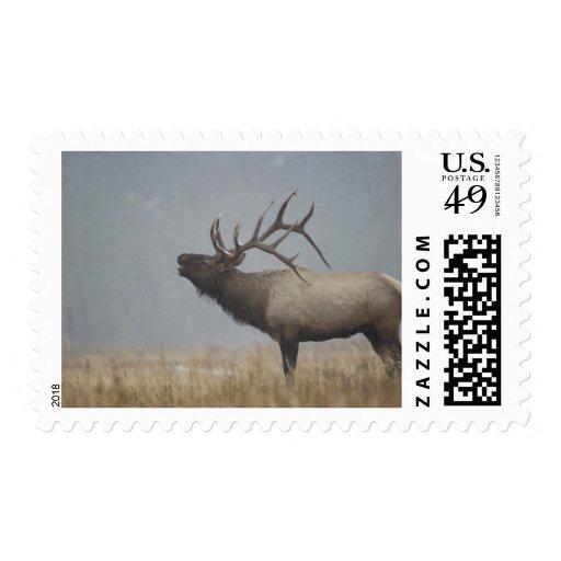 Bull Elk in snow storm calling, bugling, Postage Stamp