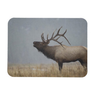 Bull Elk in snow storm calling, bugling, Rectangular Photo Magnet