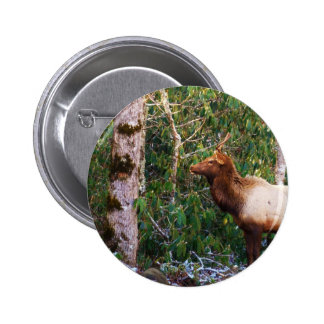 Bull Elk in Trees 2 Inch Round Button