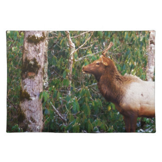 Bull Elk in Trees Placemats