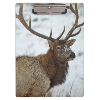 Bull elk in winter in Yellowstone National Clipboards