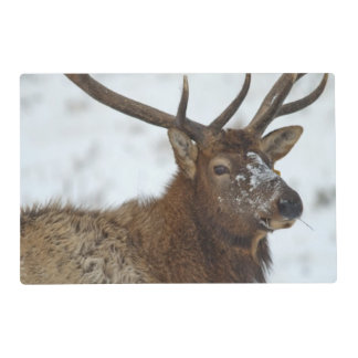 Bull elk in winter in Yellowstone National Placemat