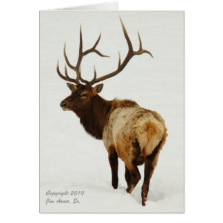 Bull Elk in Wyoming Stationery Note Card
