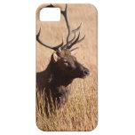 Bull Elk iPhone 5 Cover