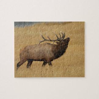 bull elk jigsaw puzzle
