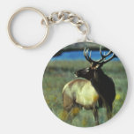 Bull elk key chain