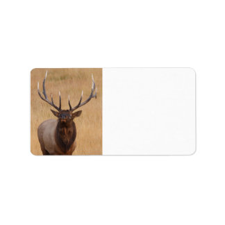 bull elk address label