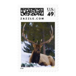 Bull Elk Majesty Postage Stamps