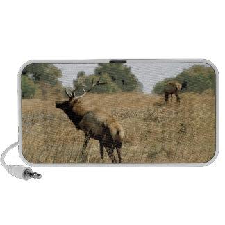 Bull Elk Mp3 Speaker