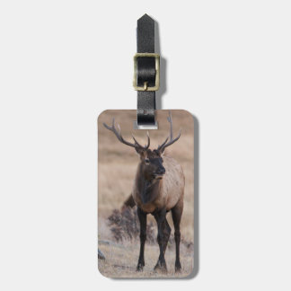 Bull Elk or Wapiti Luggage Tag
