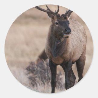 Bull Elk or Wapiti Round Sticker