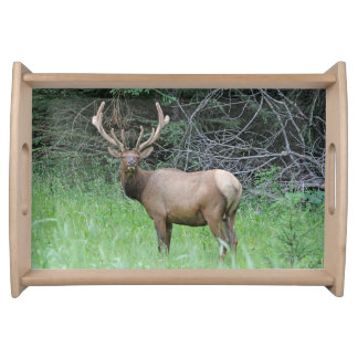 Bull Elk Photographic Serving Tray