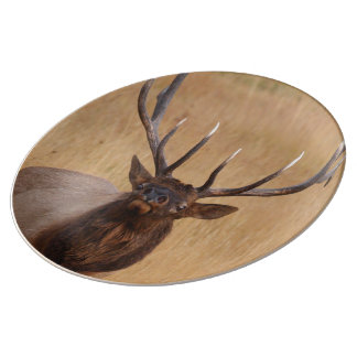 bull elk plate