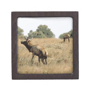 Bull Elk Premium Trinket Boxes