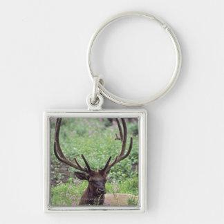 Bull Elk Resting In Alpine Meadow With Antlers Key Chains