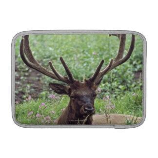 Bull Elk Resting In Alpine Meadow With Antlers MacBook Sleeve