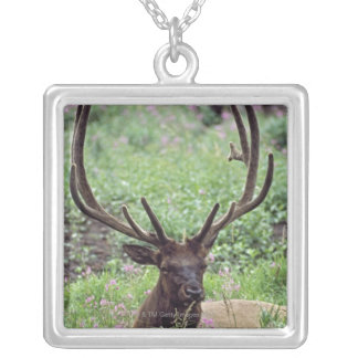 Bull Elk Resting In Alpine Meadow With Antlers Silver Plated Necklace