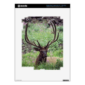 Bull Elk Resting In Alpine Meadow With Antlers Decal For iPad 3