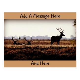 Bull Elk Silhouette Postcard