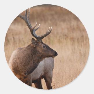 Bull Elk Stickers