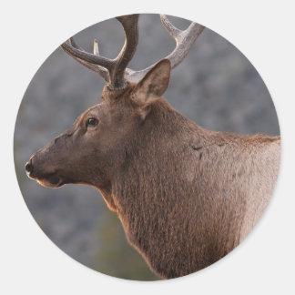 Bull Elk Round Sticker
